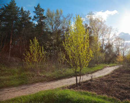 Spring natural landscape, road at the edge of the forest 스톡 콘텐츠