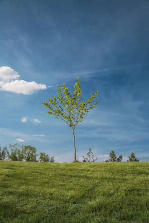 Lonely tree on a hill, natural landscape Stock Photo - 126188998