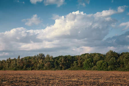 Rural landscape, cleaned field against the blue sky, in summer