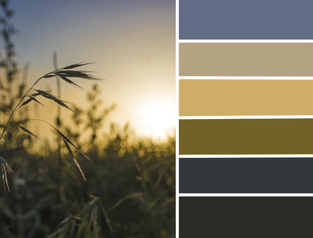 Palette of sunset meadow. Color matching palette Stock Photo