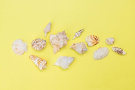 Seashells on a yellow background top view, space for text Stock Photo