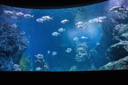 Sea Life Bangkok Ocean World Aquarium in the shopping center of Siam Paragon, Thailand 版權商用圖片