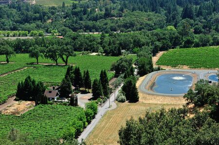 Napa Valley Birds Eye View