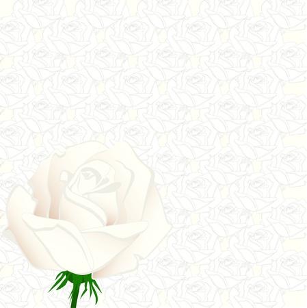 congratulations text: Rose