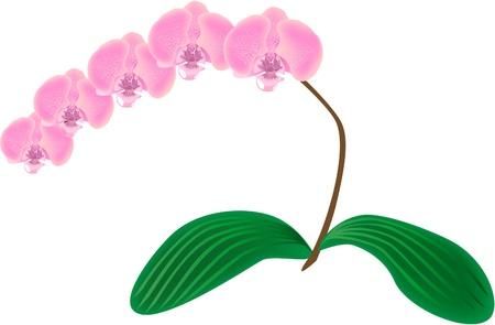 sepal: Orchid
