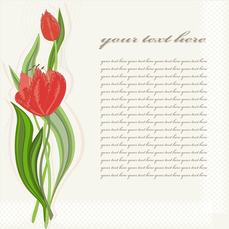 Greeting card with tulip Stock Vector - 10585261