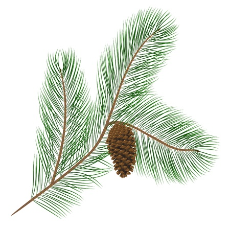 Vector illustration of pine cone with pine needles Illustration