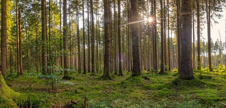 Beautiful sunshine moment in the morning in the forest. Banque d'images - 130814355