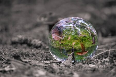 The view through a colored lensball forest landscape with a black and white background.