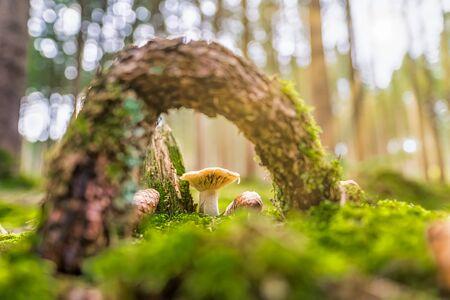 Mushroom framed by a wood on mossy green meadow.