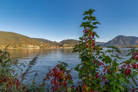 Autumn colored plants oin front of a beautiful lake.