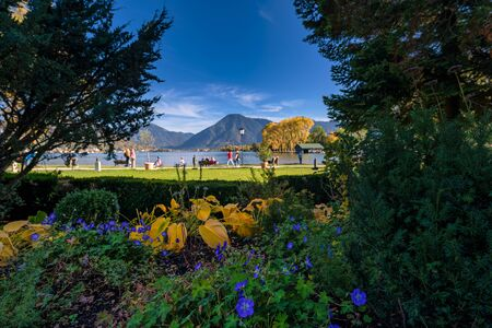 The view over blue flowers at a lake with mountains in germany at the Tegernsee.