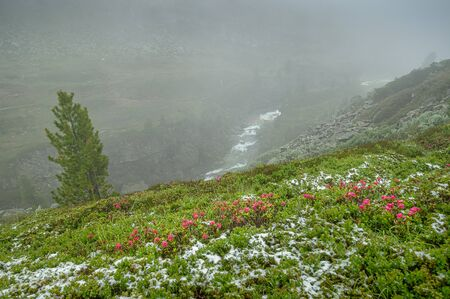 Hiking theme - a meadow full of flowers and covered by some snow the the down view at a flowing river in the austrian Zillertal.