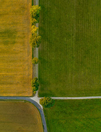 Top view from a drone at a avenue with green trees in a row from above. 写真素材