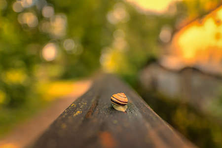 Spring nature background with snail in sunset. 写真素材