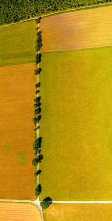 View from above over a straight line of trees, a beautiful avenue as top shot in summer. 写真素材 - 154385267