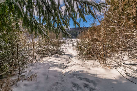 Framed view through branches at a snow covered path - winter landscape in a authentic kind.