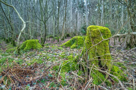 A green mossy tree trunk in the middle of a forest. 写真素材