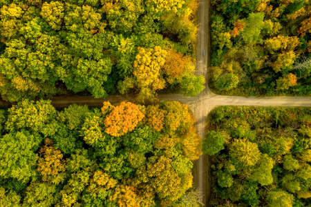 Crossing a forest looks like a natural flag, drone shot in autumn straight from above.