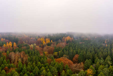 Wide colorful forest aerial landscape from above at a foggy autumn day with copyspace at the top of the image.