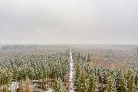 Aerial view of a snowy forest with high pines and straight road with a car in the winter.