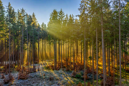 The bright sun is shining through the treetops and sunbeams pave their way to warm up the frozen, snow covered ground.
