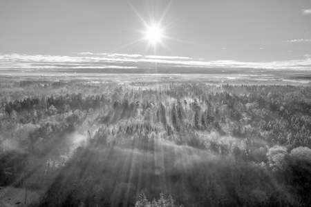 Scenic view of rays of sun beaming through the forest, an aerial from a drone over woodland.