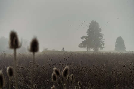 Bicycle rider alone in the fog of a early morning with a group of plants parallel situated like two trees in the background. 写真素材