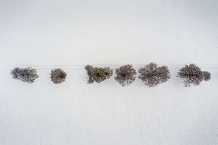 Aerial view in winter at snow over a row of bare trees, straight line of leafless wooden material.
