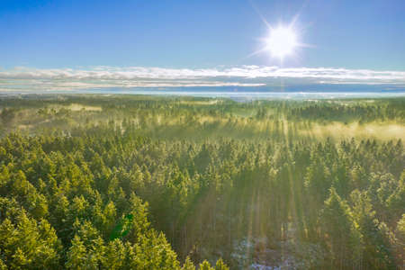Drone photo of foggy sunrise over forest, golden sun light with beams and shadows.