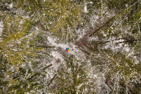 Wonderful winter - Snowy forest scenery with a central rainbow umbrella - arial top down view.