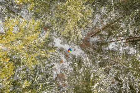 Color contrast - a rainbow colored umbrella in the middle of a green forest covered with white snow 写真素材