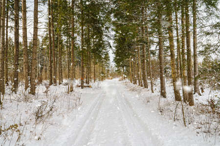 Idyllic path in a snowy winter forest at the fresh air. Snow covered road with leading lines. 写真素材
