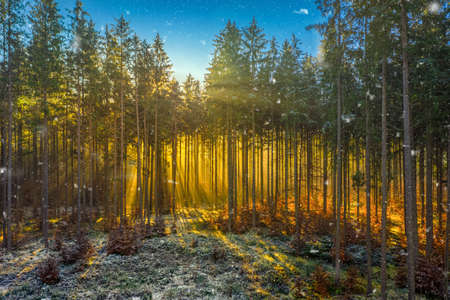 Wonderful moment in a foggy autumn forest, sunrays a coming through the morning fog and enlightens the idyllic place of nature, impressive environment. 写真素材