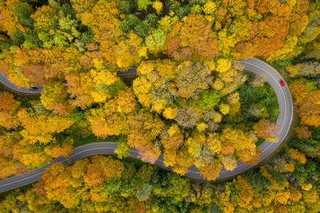 Fantastic autumn - colorful treetops with a significant red car driving through a double curve of a serpentine street at the fall. 写真素材