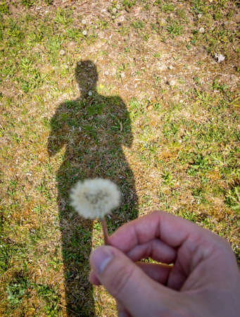 A mans shadow forming his silhouette to the grass holding a dandelion flower.