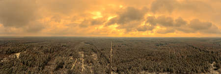 Panoramic coniferous forest in Germany while the sunset is ongoing with wonderful glowing clouds at a wintry evening.