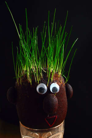 beatuful: planting grass everywere even on the head