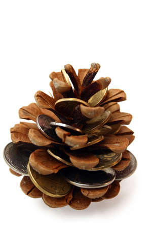 pine cone with money as seeds inside isolated on white photo