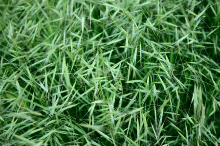 locating: grass seeds locating chaotic as background Stock Photo