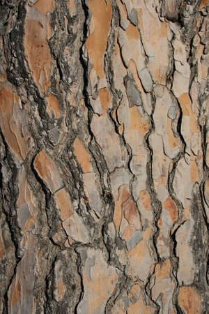 abstract pine bark texture in high resolution photo