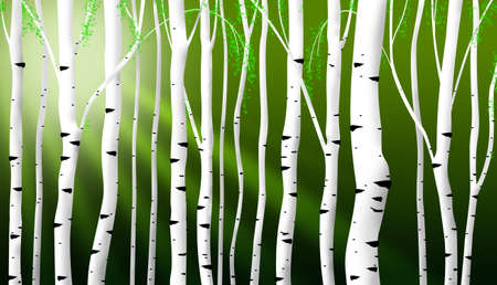abstract birch stems illustration as spring background