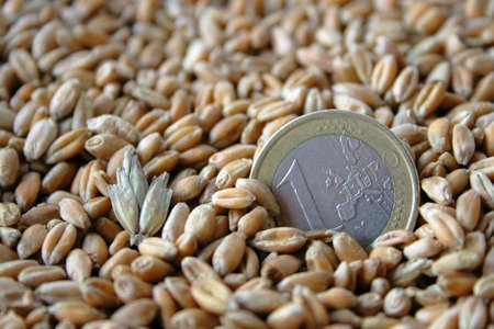 one euro coin among wheat grains as symbol of agricultural job macro shot