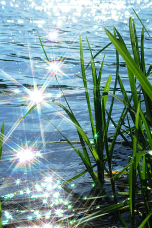 sun light sparkle on wave in river and cattail Stock Photo
