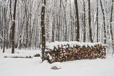 woodpile: Woodpile in winter and forest under snow. Stock Photo