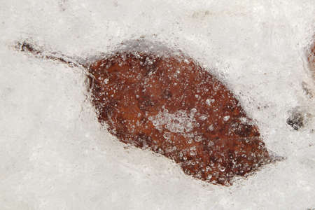 frozen leaf in ice with air bulbs