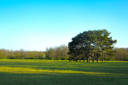 The group of trees on meadow with shadows and clear sky Stock Photo