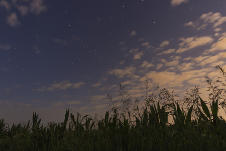 lacerta: White clouds, blue sky, stars and cornfield  With Constellations Lacerta, Cassiopeia, Cepheus, Cygnus