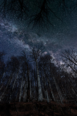 Night full of stars seen through trees Milky Way through trees