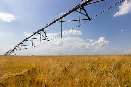 irrigation equipment: Wheat field and irrigation equipment